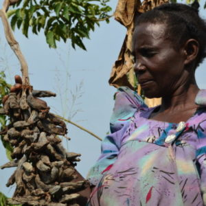 Frances Nanziri hopes to get access to GM technology to rescue her diseased banana farm.