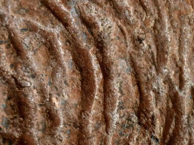 Bliższe spojrzenie na ślady pazurów. (Zdjęcie: Heinrich Frank)
