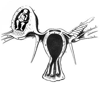 Ciąża pozamaciczna; R. de Graaf, De Mulierum Organis Generationi Inservientibus, reprint z listu Benoit Vassala do Royal Society, 1669; domena publiczna