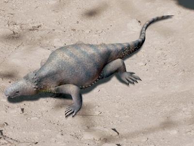 Rekonstrukcja Eunotosaurus africanus; Nobu Tamura, Wikipedia, CC BY-SA 4.0