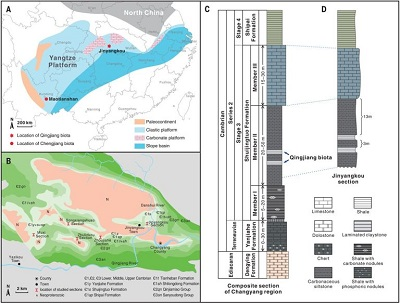 <span>From paper: Fig. 1 Locality map and early Cambrian stratigraphy of the study area. (A) Lithofacies map of the Yangtze Platform during Cambrian Stage 3, with type localities of the Qingjiang and Chengjiang biotas. (B) Geological map of the study area, showing the distribution of Cambrian outcrops and the location of studied sections with characteristic couplets of background and event claystone beds within the middle member of the Shuijingtuo Formation. (C) Composite stratigraphic column for the study area. (D) Stratigraphic column at the Jinyangkou type locality.</span>