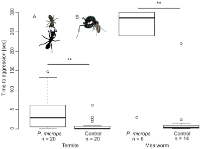 Figure 1. Time from first ant, Paltothyreus tarsatus, contact with termites (left; inlet A) or mealworms (right), coated with the skin secretion of Phrynomantis microps, until stinging (inlet B). Control groups are termites or mealworms coated with water. Boxplots show the median and the interquartiles of time from first ant contact with a termite or mealworm until stinging. Coated insects were stung significantly later than control insects. Taken from here.