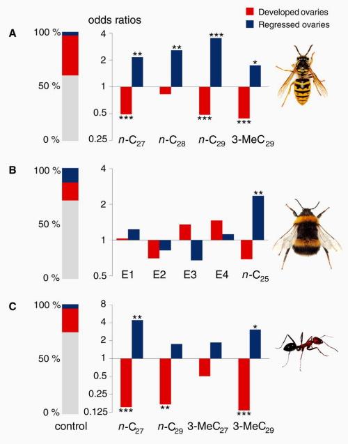 """""""Wyniki pokazują, że naskórkowe węglowodory o długich łańcuchach działają jako konserwatywnaklasa feromonów królowej, które indukują sterylność, u trzech niezależnie wyewoluowanych linii rodowych owadów społecznych, reprezentowanych przez osęV. vulgaris(A), trzmielaB. terrestris(B) i mrówkęC. iberica(C). Potraktowanie grup robotnic pozbawionych królowej alkanami liniowymin-C<sub>27</sub>in-C<sub>29</sub> metylo-alkanem 3-MeC<sub>29</sub> spowodowało dwu- do siedmiokrotnie mniejszy udział robotnic posiadających w pełni rozwinięte jajniki u os i mrówek iberyjskich (wykres kolumnowy, kolumny czerwone) w stosunku do potraktowanych pentanem grup kontrolnych (wykres kolumnowy po lewej)"""""""