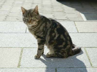 Plamisty wzór kota