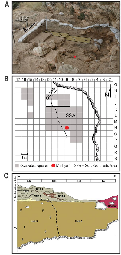 A) The excavation area and the location of the Misliya-1 maxilla (red dot). Squares K9 to K12 are indicated. (B) Map of the Misliya Cave Upper Terrace excavations (1 m2 grid) with denoted excavated squares and showing the location of the human maxilla (Misliya-1). (C) Stratigraphic section of the Upper Terrace, squares K9 to K12. Apart from Unit 2, a Terra Rosa soil intrusion, all units contain EMP finds or assemblages. The present-day dripline roughly separates between highly cemented (Units 1,3,5) and more loosely cemented (Units 4 and 6) sediments. Misliya-1 was retrieved from the upper part of Unit 6.