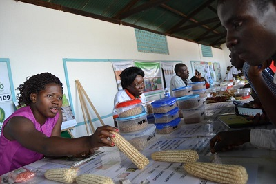 Winnie Nanteza z Biura Informacyjnego WEMA w Ugandzie podaje farmerowi kolbę odpornej na suszę kukurydzy.