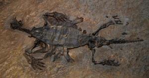"""<span>Pozostałości """"prażółwia"""" z rodzaju Odontochelys; pekińskie muzeum historii naturalnej; Ghedoghedo, Wikipedia; CC BY-SA 4.0</span>"""