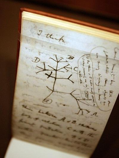 """<span>Szkic """"Drzewa życia"""" Charlesa Darwina ilustruje jego teorię, że gatunki wyewoluowały od wspólnego przodka. (Zdjęcie: Mario Tama/Getty Images)</span><br />"""