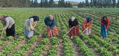 Rolnictwo wEgipcie wymaga radykalnej reformy.