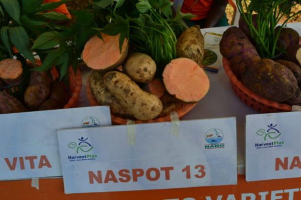 Odmiany słodkich ziemniaków o pomarańczowym miąższu