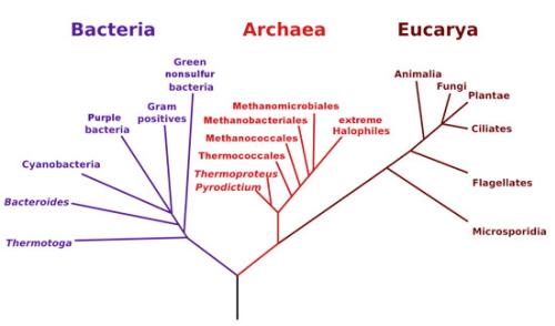 Drzewo trzech domen. Wikipedia. Wersja o dużej rozdzielczości znajduje się tutaj: http://bit.ly/threedomains