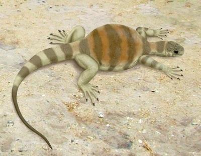 <span>Rekonstrukcja Eunotosaurus africanus; Smokeybjb, Wikipedia, CC BY-SA 3.0</span>