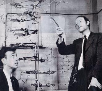 Watson i Crick wkrótce po tym jak wkroczyli do pubu i oznajmili, że odkryli tajemnicę życia. Francis Crick zmarł 28 lipca 2004 roku w wieku 88 lat. Matt Ridley napisał jego błyskotliwą biografię w książce Francis Crick, Discoverer of the Genetic Code.