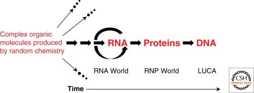 Model świata RNA kolejnego pojawiania się RNA, białek i DNA podczas ewolucji życia na Ziemi. Wiele izolowanych mieszanek złożonych cząsteczek organicznych nie osiągnęło samoreplikacji i dlatego wymarło (oznaczone strzałką wiodącą do wymarcia). Szlaki, które prowadziły do samoreplikującego się RNA są zachowane u współczesnych potomków. Strzałki na lewo od samoreplikującego się RNA dotyczą prawdopodobnych, samoreplikujących się systemów, które poprzedzały RNA. Białka wystarczająco duże, by się same składały i wykonywały użyteczne czynności, pojawiły się dopiero po tym, kiedy dostępny był RNA do katalizowania ligacji peptydów lub polimeryzacji aminokwasów, chociaż aminokwasy i krótkie peptydy były obecne w mieszankach daleko po lewej stronie. DNA przejął rolę genomu stosunkowo późno, chociaż nadal >miliard lat temu. LUCA miały już genom DNA i przeprowadzały biokatalizę używając enzymów białkowych, jak również enzymów RNP (takich jak rybosomy) i rybozymów. Rysunek i podpis z Cech (2012)