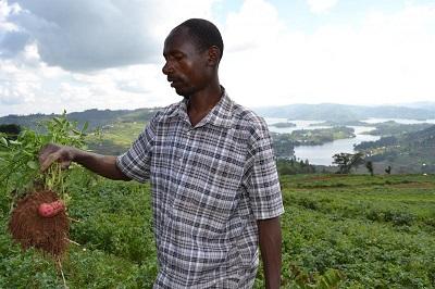 Farmer Friday Herbert zbiera mizerny plon nawet po użyciu środków grzybobójczych. Zdjęcie: Isaac Ongu