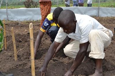 Miejscowi farmerzy uczestniczą w próbach polowych GMO w Rwebitaba.Zdjęcie: Isaac Ongu