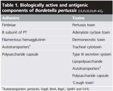 """Krztuścowe toksyny i adhezyny, w tym postulowana przez niektórych autorów hipotetyczna """"toksyna kaszlowa""""; https://www.ncbi.nlm.nih.gov/pubmed/24992986"""