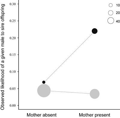 <span>Wykres 1 (z artykułu): Zaobserwowane przeciętne prawdopodobieństwo posiadania potomstwa przez samca w obecności matki i jej nieobecności. Bonobo są przedstawione na czarno, a szympansy na szaro. Rozmiary kół reprezentują liczbę potomstwa. Ogólnie wyższe prawdopodobieństwo samca do spłodzenia danego potomka u bonobo jest spowodowane mniejszą liczbą samców w grupie w porównaniu do szympansów.</span>