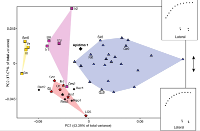 <span>Analysis 5. PCA of Procrustes-superimposed neurocranial landmarks and semilandmarks shared between Apidima 1 and Apidima 2, PC1 compared to PC2. H. sapiens (n = 23), Neanderthals (n = 6), MPE (n = 4), MPA (n = 5). Wireframes below and next to the plot illustrate shape changes along PC1 and PC2. Symbols as in Fig. 2.</span>