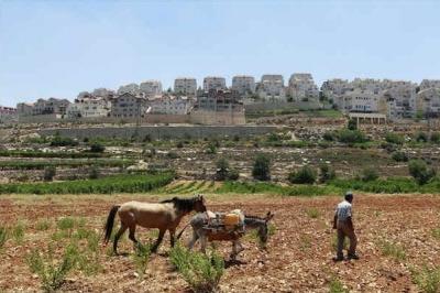 Czy fakt, że paletyński rolnik nadal posługuje się koniem i osiołkiem spowodowany jest okupacją i osiedlami, czy korupcją palestyńskich elit i obojętnościa świata?