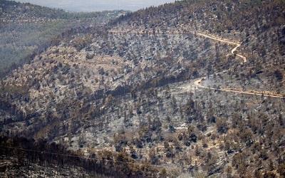 <span>Widok spalonych drzew po olbrzymich pożarach w górach Jerozolimy, 17 sierpnia 2021. (Yonatan Sindel/Flash90)</span>