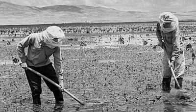 Żydowscy osadnicy osuszają moczary w dolinie Hula w latach 20. ubiegłego wieku. Zdjęcie: KLUGER ZOLTAN