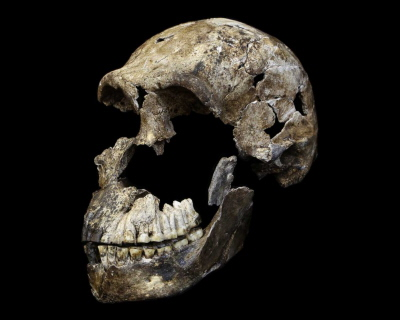 Mija półtora roku od odkrycia noewgo gatunku homininów nazywanego Homo naledi, czaszka znaleziona w Rising Star Cave nieopodal Johannesburga.