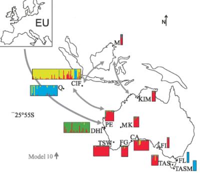 Rys. 2 Koch i in. (2015). Mapa Australii, Azji Południowowschodniej i Europy z możliwymi trasami inwazji. Możliwe trasy inwazji kotów na mapie Australii i Azji Południowowschodniej z Europy (EU) w górnym, lewym rogu. Strzałki wskazują trasy inwazji z największym poparciem modelu filogeograficznego doboru (model 10 szare strzałki; dalsze szczegóły w Additional file 4: Rys. S3). Wykres STRUCTURE pokazuje pochodzenie (K=4) wywnioskowane z danych mikrosatelitarnych sekwencji DNA dla lądu Australii, wysp Australii i Azji Południowowschodniej. Każdy indywidualny kot jest reprezentowany przez jedną linię prostą na wykresie dla każdej lokalizacji.