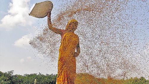 Badania pokazują, że wydanie dodatkowych 5,5 bilionów dolarów na rozwój nowych technologii w rolnictwie zwiększyłoby zbiory o 0,4 procenta rocznie . (Reuters)