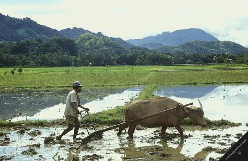 Kto bardziej niszczy środowisko, milion rolników produkujących minimalne nadwyżki, czy tysiąc rolników karmiących milion?