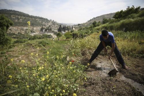 Młody palestyński rolnik kieruje motyką strumień wody na swoje poletko we wsi Battir. Większość palestyńskich rolników stosuje starożytne metody nawadniania, znane w tym regionie od czasów rzymskich. Foto: Hadas Parush / Flash90