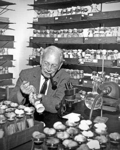 Alfred H. Sturtevant, Profesor biologii, emeritus, w swoim laboratorium w Caltech w 1965 r. Zdjęcie James McClanahan. Credit: Caltech Archives