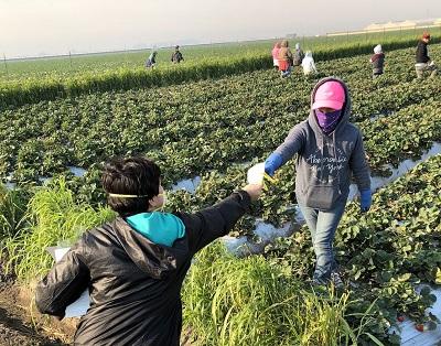 W rolnictwie pracy zdalnej nie będzie.
