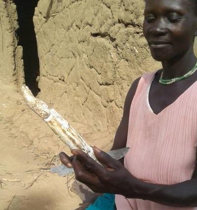 Slivia Okello przygotowuje korzeń trującej kassawy.
