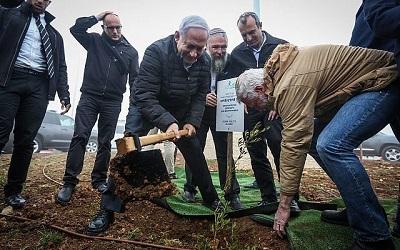Premier Benjamin Netanjahu sadzi drzewo oliwne w dzielnicy Netiv Ha'avot w osiedlu Elazar na Zachodnim Brzegu, 28 stycznia 2019 roku. (Marc Israel Sellem/Pool)