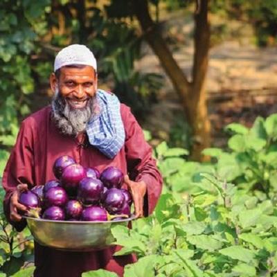 Na zdjęciu: Farmer z Bangladeszu, Chalilur Rahman, pokazuje swoje zbiory bakłażanów Bt.Zdjęcie: Arif Hossain